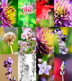 Mixed beautiful flowers Stock Photography
