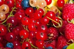 Mixed berries Stock Image