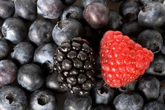 Mixed Berries. A raspberry and a blackberry on a bed of blueberries stock photo
