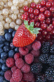 Mixed Berries. On a plate Royalty Free Stock Photo