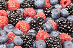 Mixed Berries. Full frame of different kind of berries Stock Image