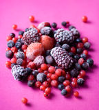 Mixed berries. Composition of various tasty berries Stock Images