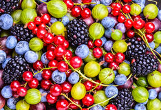 Mixed berries background. Royalty Free Stock Photo