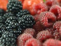Mixed berries - close-up. Closeup of blackberries and raspberriesm; macro royalty free stock images