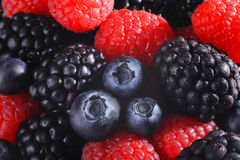 Mixed berries cool background Stock Photography