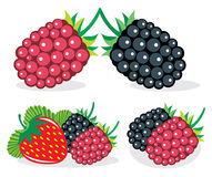 Mixed berries vector illustrations Stock Photography