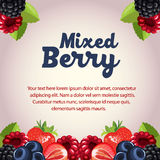 Mixed berry card. Template with background Stock Photography