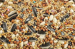 Mixed bird food Stock Image