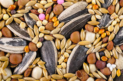 Mixed bird food closeup Royalty Free Stock Photo