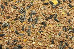 Mixed Bird Seed. A wide selection of grains, grasses and pulses, dried and mixed - designed for wild birds Stock Photo