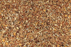 Mixed bird seed close up Stock Images