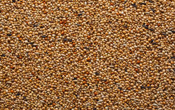 Mixed Bird Seed Royalty Free Stock Photo