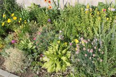 Mixed Border with various of annual and perennial garden plants. Flowerbed of continuous flowering stock images
