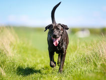 Mixed-bred dog Royalty Free Stock Photos