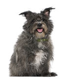 Mixed-breed, 8 years old, sitting Royalty Free Stock Photos