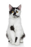 Mixed-breed beautiful cat portrait Royalty Free Stock Photos