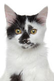 Mixed-breed beautiful cat portrait Stock Images