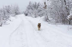 Mixed breed black dog standing on a snowy earth road looking around. Lonely mixed breed black dog standing on a snowy earth road looking around Stock Photo