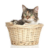 Mixed-breed cat in basket. On a white background Stock Photography