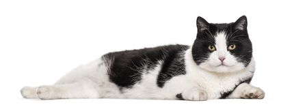 Mixed-breed cat lying against white background. Isolated on white Royalty Free Stock Photos