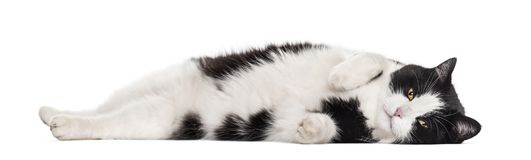 Mixed-breed cat lying against white background. Isolated on white Royalty Free Stock Image