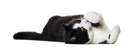 Mixed breed cat lying on side against white background Stock Photo