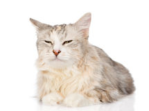 Mixed breed cat sleeping. isolated on white background Stock Photo