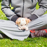 Mixed-breed cute little puppy in lap. Royalty Free Stock Photos