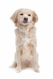 Mixed breed dog Stock Image