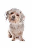 Mixed breed dog Stock Photo