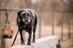 Mixed breed Dog in agility training. Royalty Free Stock Photos