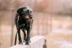 Mixed breed Dog in agility training. Royalty Free Stock Images