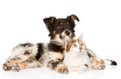 Mixed breed dog and cat looking away. isolated on white. Background Stock Photo