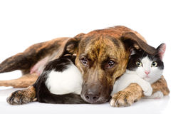 Mixed breed dog and cat lying together. isolated on white backgr Stock Image