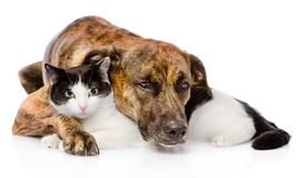 Mixed breed dog and cat lying together. isolated on white Royalty Free Stock Photo