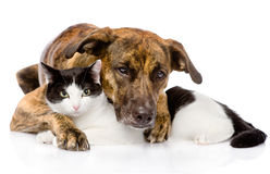 Mixed breed dog and cat lying together.  on white backgr Stock Photo
