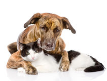 Mixed breed dog and cat lying together.  on white backgr Stock Images