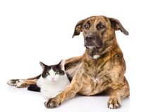 Mixed breed dog and cat together. isolated on white background.  Royalty Free Stock Image