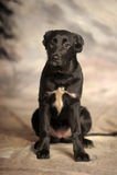 Mixed-breed dog Stock Photography