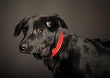 Mixed-breed dog Royalty Free Stock Photo