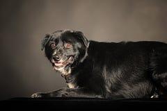 Mixed-breed dog Stock Photos