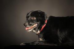 Mixed-breed dog Royalty Free Stock Photos