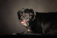 Mixed-breed dog Stock Images
