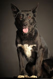 Mixed-breed dog Royalty Free Stock Images
