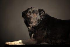Mixed-breed dog Stock Photo