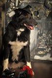 Mixed-breed dog Royalty Free Stock Photography