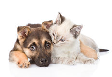 Mixed breed dog embracing small cat on white background. Mixed breed dog embracing small cat. isolated on white background Stock Photo