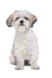 Mixed breed dog Royalty Free Stock Photography
