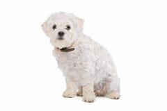Mixed breed dog Royalty Free Stock Photo
