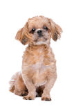 Mixed breed dog Stock Photos